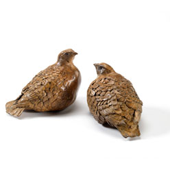 Sitting_Grouse