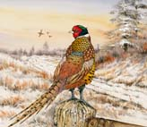Winter_Pheasant