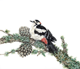 Greater_spotted_woodpecker